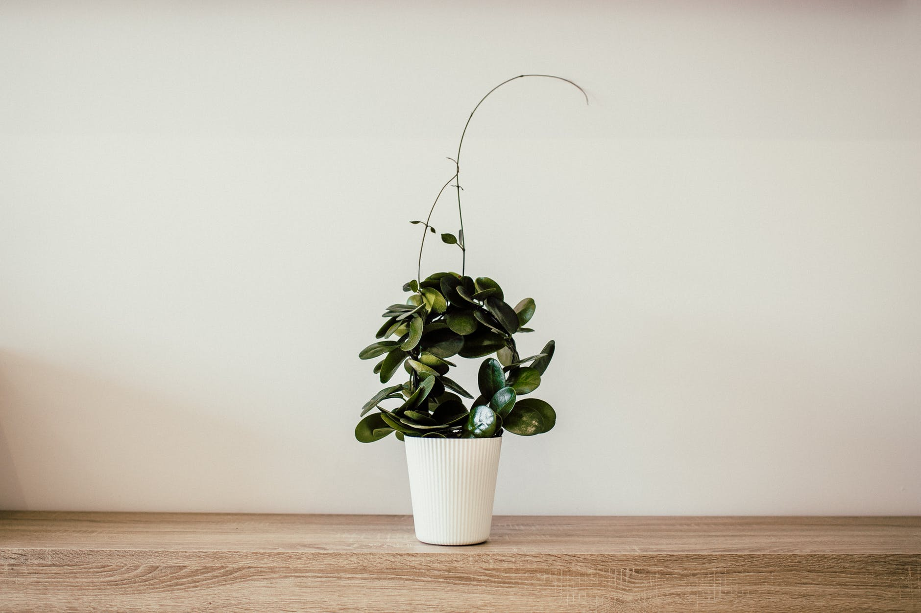 Live Plants Can Reduce Dust by up to 20%